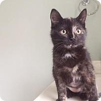 Adopt A Pet :: Sonia - Columbia, SC