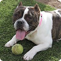 Adopt A Pet :: Ruby and Diesel - Las Vegas, NV