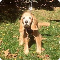 Adopt A Pet :: Todo - Flushing, NY