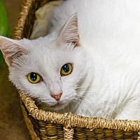 Adopt A Pet :: White - oakland park, FL