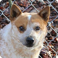 Adopt A Pet :: Pepper - Allentown, PA