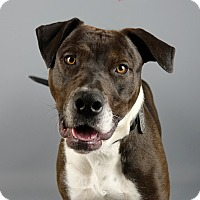 Adopt A Pet :: Sparky - Columbia, IL