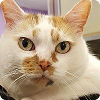 Adopt A Pet :: Makayla - Grayslake, IL