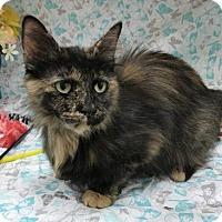 Adopt A Pet :: Chessy - Menominee, MI