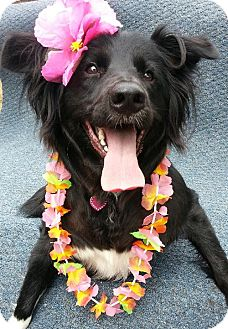 Labrador Retriever/Golden Retriever Mix Dog for adoption in Fresno, California - Madison