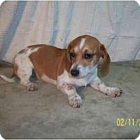 Adopt A Pet :: DANNI - Rossford, OH