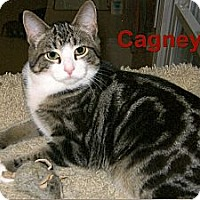 Adopt A Pet :: Cagney - Medway, MA