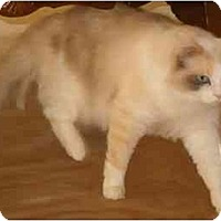 Adopt A Pet :: Skittles - Keizer, OR