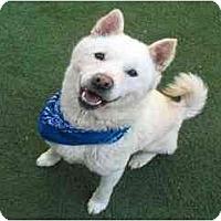 Adopt A Pet :: Roo - Marysville, CA
