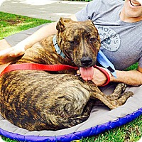Adopt A Pet :: Axl - super cute videos! - Los Angeles, CA