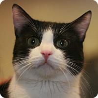 Adopt A Pet :: Sylvester - Canoga Park, CA