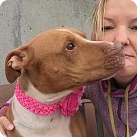 Adopt A Pet :: BRANDI - Kimberton, PA