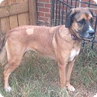 Adopt A Pet :: Rebekah - Westport, CT