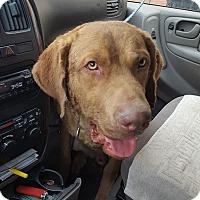 Adopt A Pet :: Titan - Blue Bell, PA