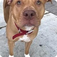 Adopt A Pet :: Ariana - San Diego, CA