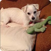 Adopt A Pet :: Dash - Rochester, NY