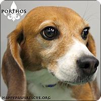 Adopt A Pet :: Porthos - South Plainfield, NJ