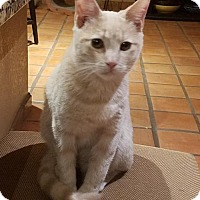 Adopt A Pet :: Howard 'Deke' Hooligan - Glendale, AZ