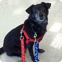Adopt A Pet :: Joss - Ft. Lauderdale, FL