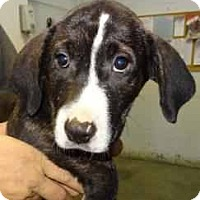 Adopt A Pet :: Phoebe ADOPTED!! - Antioch, IL