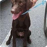 Adopt A Pet :: Camilla - Cumming, GA
