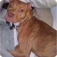 Adopt A Pet :: Peaches *courtesy post* - Rochester, NY