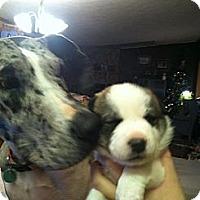Adopt A Pet :: maggie's girls - Alliance, NE