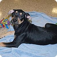 Adopt A Pet :: Courtney - Minneola, FL