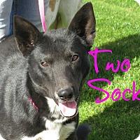 Adopt A Pet :: Two Socks - Scottsdale, AZ