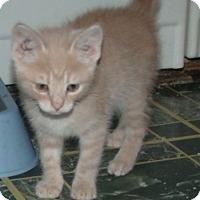 Adopt A Pet :: PARKER - Acme, PA