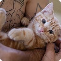 Adopt A Pet :: Mowgli - Los Angeles, CA