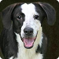 Adopt A Pet :: Jilly - Lufkin, TX