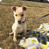 Adopt A Pet :: Butter - New Oxford, PA