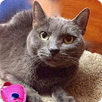 Adopt A Pet :: Willow - Long Beach, NY