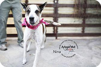 Australian Cattle Dog Mix Dog for adoption in Orange, California - Nina