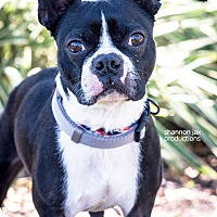Adopt A Pet :: Dodge - Gainesville, FL