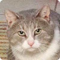 Adopt A Pet :: Hero - Medford, MA