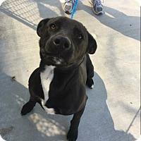 Adopt A Pet :: Otis - Groton, MA