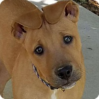 Adopt A Pet :: Sam - SOUTHINGTON, CT