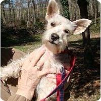 Adopt A Pet :: Lincoln - Staunton, VA