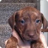 Adopt A Pet :: Reba - Washington, NC