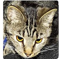 Adopt A Pet :: Eve - Owosso, MI