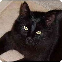 Adopt A Pet :: Benti - Portland, OR