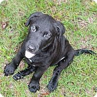 Adopt A Pet :: Riley - Southington, CT