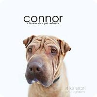 Adopt A Pet :: Connor - pending - Mira Loma, CA