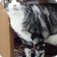 Adopt A Pet :: Samson - Diamond Springs, CA