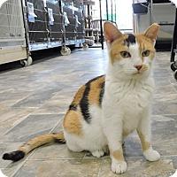 Adopt A Pet :: Sandy - Massapequa, NY