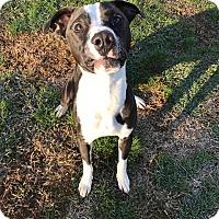 Adopt A Pet :: Dillinger - Fort Valley, GA