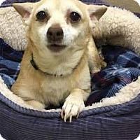 Adopt A Pet :: Barton - Newport, KY