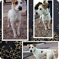 Adopt A Pet :: Bentley - Tucson, AZ